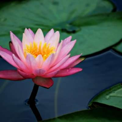 Still Water: Where the Lotus Blooms – Feb. 17, 2019 8am