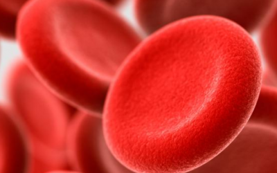 Blood: Our Fluid Link to Vitality, Emotions and Memory – Feb. 16, 2019 12:45pm